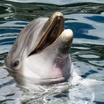 zwierzę na d - delfin