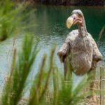 zwierzę na d - dodo