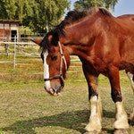 zwierzę na k - koń