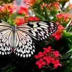 zwierzę na m - motyl