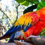 zwierzę na p - papuga