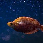 zwierzę na r - ryba