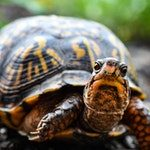 zwierzę na ż - żółw