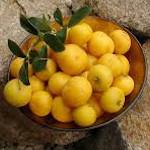 owoc na u umkokolo