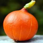 warzywo na h hokkaido