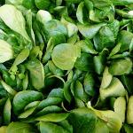 warzywo na r roszpunka warzywna
