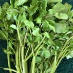 warzywo na r rukiew