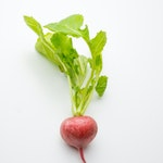 warzywo na r rzodkiewka